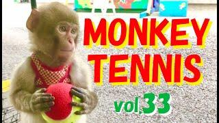 Real MONKEY TENNIS!vol.33 テニスをする猿くんのダブルス前編
