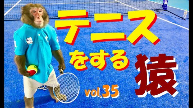 世界初テニスをする猿 3年間の軌跡 MONKEY TENNIS vol.35