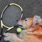 テニスのラリー音と人の話し声BGMにお昼寝15分~15 minutes nap on tennis rally sound and human voice BGM~